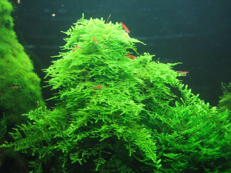 Search Results For Aquarium Ikan Hias Black Hairstyle And