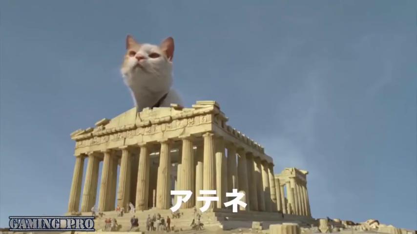 Gambar Kucing Raksasa godean.web.id