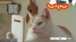 kucing_selfie.png