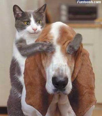 kucing-anjing.jpg - Hewan & Peliharaan - Photo Gallery