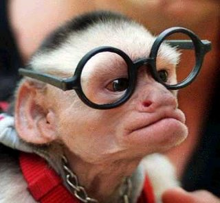 Gambar Lucu - monyet.jpg