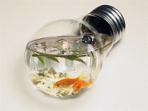 aquabulb-custom.jpg