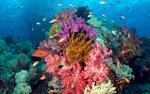 Coral Reef. Papua Indonesia.jpg