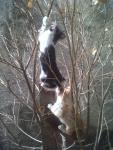 anak kucing bandel manjat pohon  dikira sekolah taman kanak-kanan kali.jpg