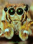P9210762_SPIDER1.jpg