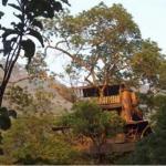 tree house2.bmp.jpg