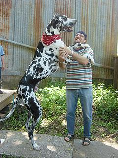 tallestdog.jpg