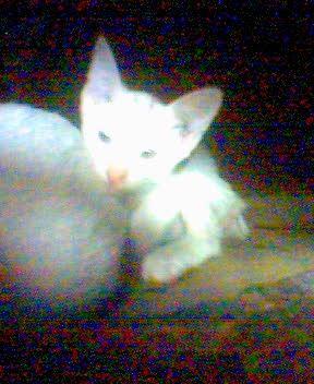 Hewan & Peliharaan - anak kucing 3