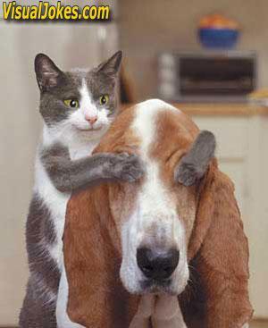 kucing_temen_anjing.jpg - Gambar Lucu - Photo Gallery