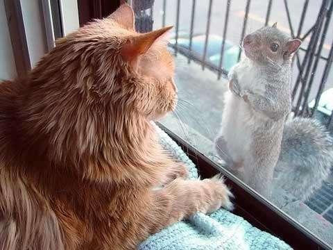 Kucing ngobrol
