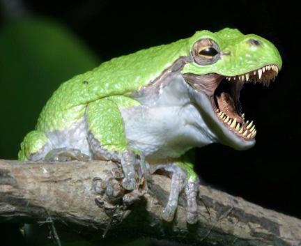 lovelizzers: Photo-photo hewan teraneh di dunia
